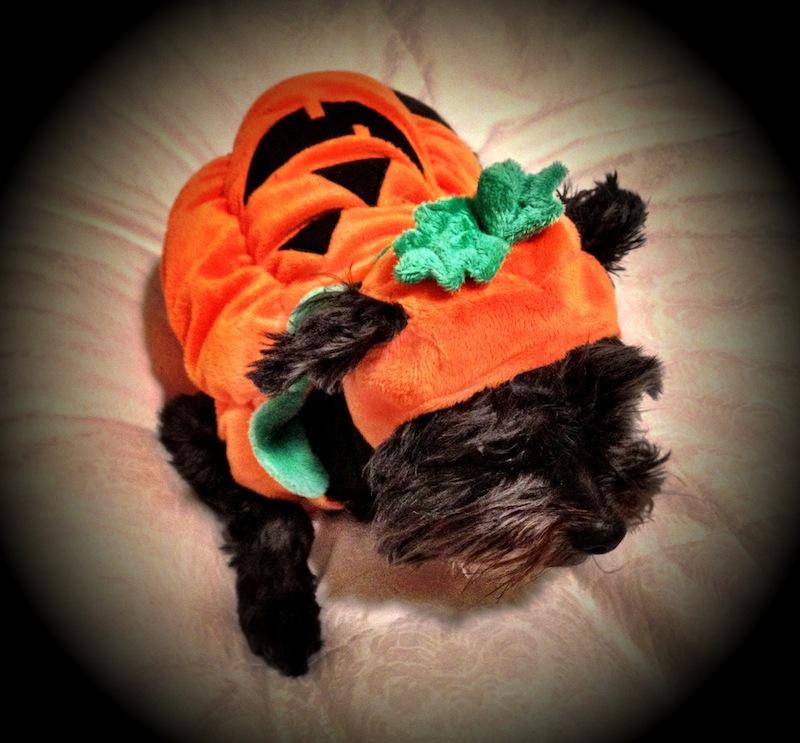 Zoey pumpkin