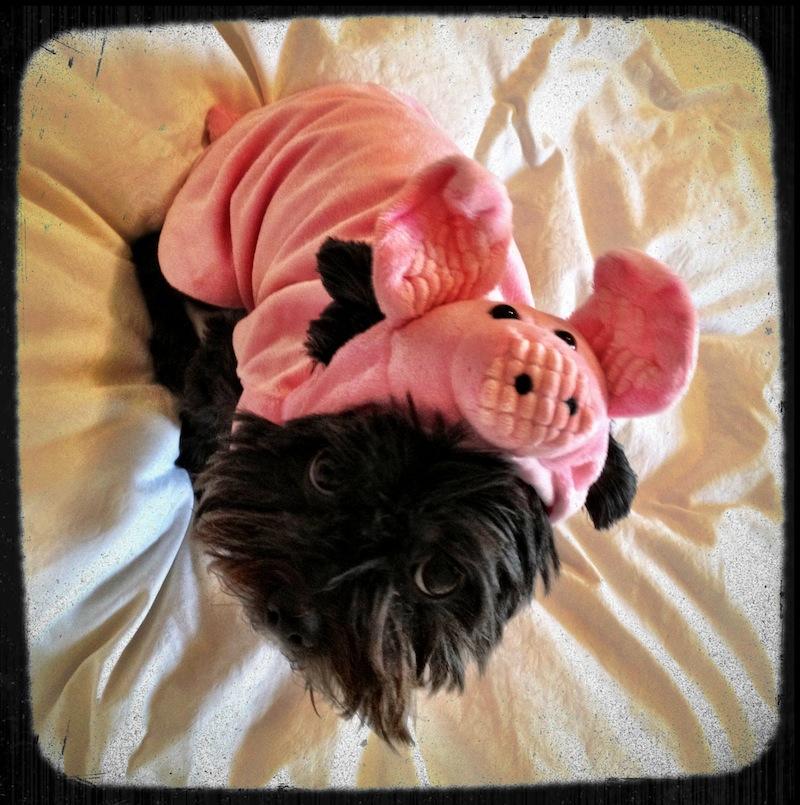 zoey pig