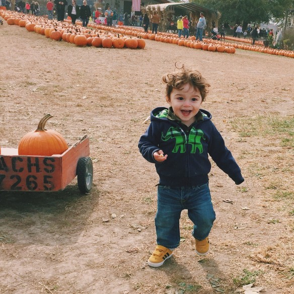 pumpkinpatch 2015